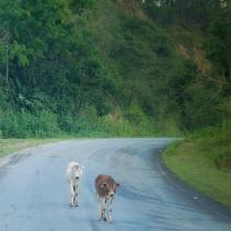 Neben den langsamen LKWs gab es auch tierische Hindernisse.